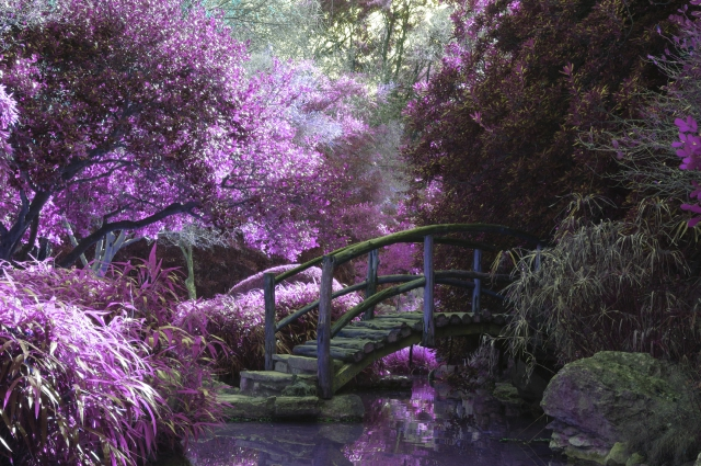 Pink Blossoms Garden-ID10231-640x426
